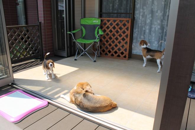 ガーデンルーム ジーマ 蓮田市 高窓を掃出しに